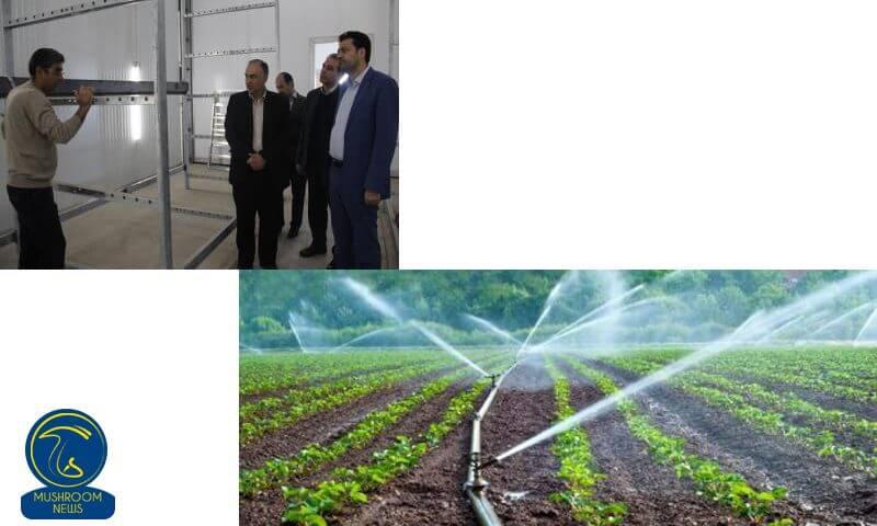 بازدید فرماندار شهرستان ملارد از بزرگترین مرکز تولید قارچ کشور
