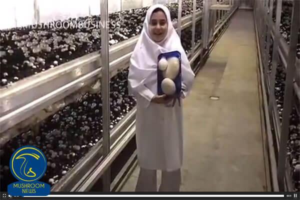 تصویر از مصاحبه باکودکان (قارچ)