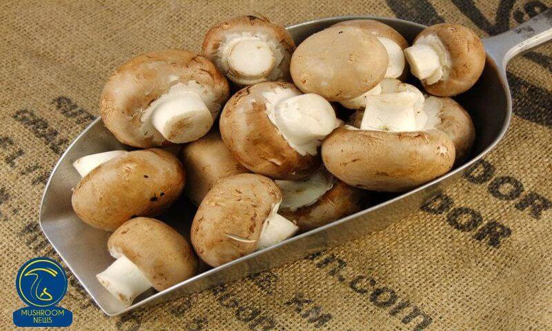 چرا شرقیها قارچ قهوهای میخورند⁉️
