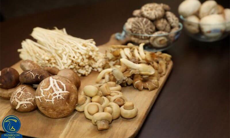 پسوندهای طبقهبندی قارچها