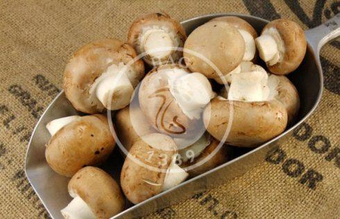 قارچ، غذای سلامتی