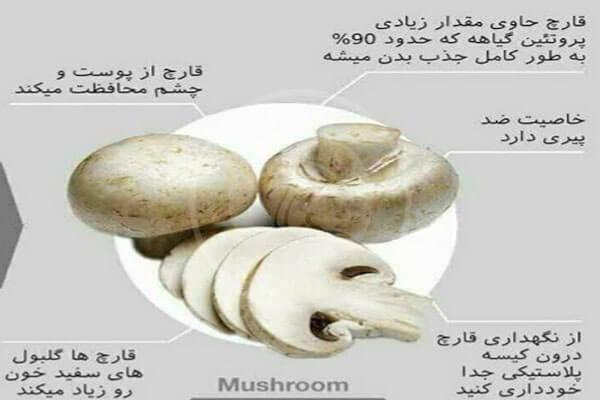 خواص قارچ خوراکی چیست؟