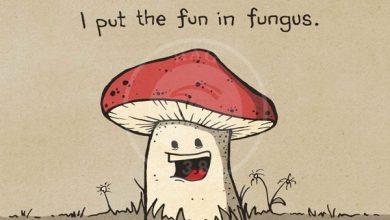 تصویر از معرفی قارچ های سمی برای کودکان