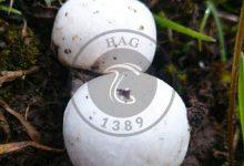 شگفتی دنیای قارچ ها, هاگ