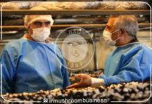 افزایش سرانه مصرف قارچ با گسترش کرونا, هاگ