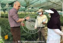 باغ گیاهشناسی گلستان تا پایان امسال به بهرهبرداری میرسد, هاگ