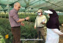 باغ گیاهشناسی گلستان تا پایان امسال به بهرهبرداری میرسد., هاگ